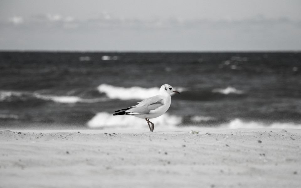 http://idtp.pl/wp-content/uploads/2014/09/tupot-białych-mew-22-960x600_c.jpg